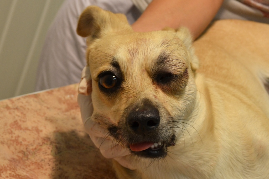 ???? собака у которой выпадают глаза породы собак, причины, лечение, профилактика, уход