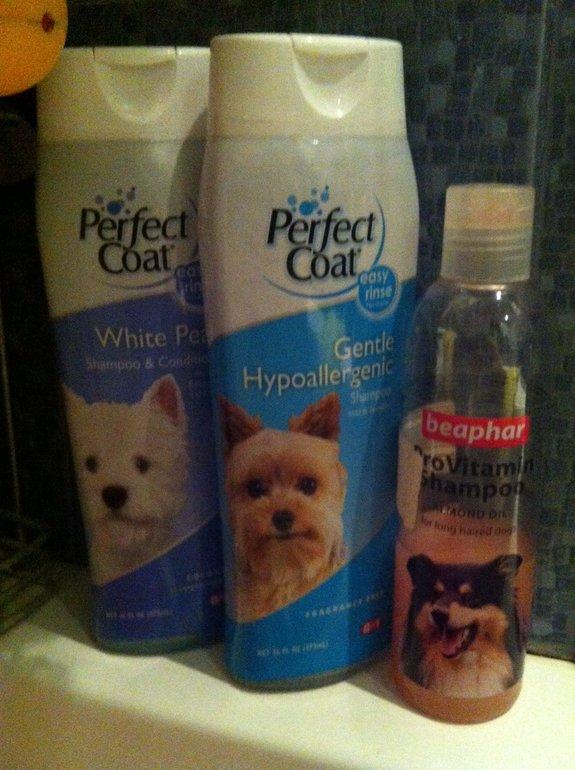 Как часто мыть йоркширского терьера - с какого возраста можно купать щенка в домашних условиях
