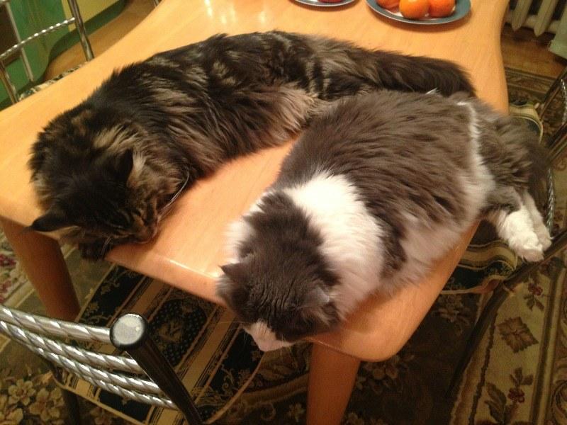 Как быстро отучить кошку лазить на кухонный стол: эффективные способы воспитания котенка