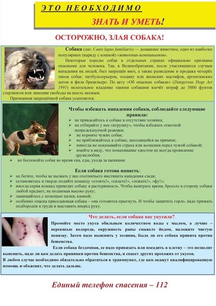 Жалоба на бездомных собак: куда обращаться
