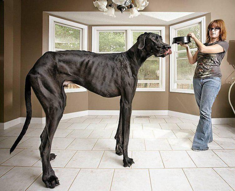 Большие породы собак: популярные породы, полный список.