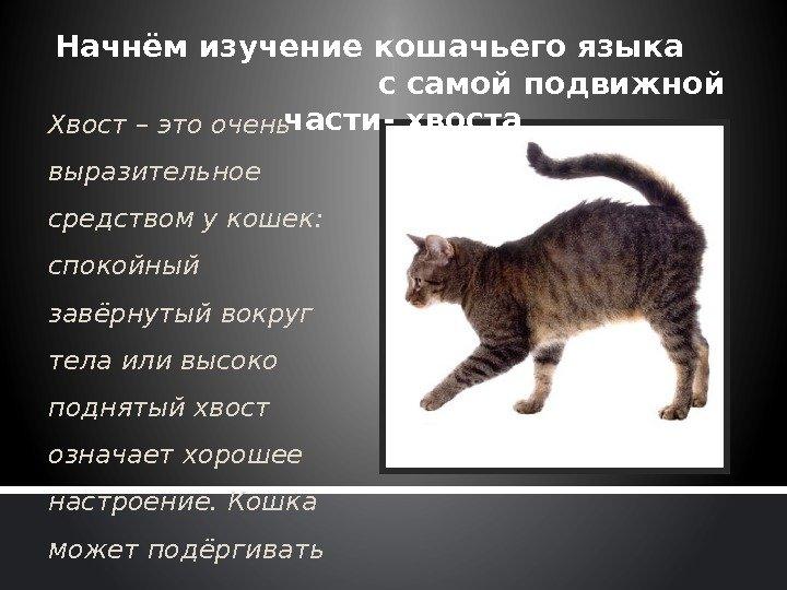 3 причины почему кошка трется мордой о человека