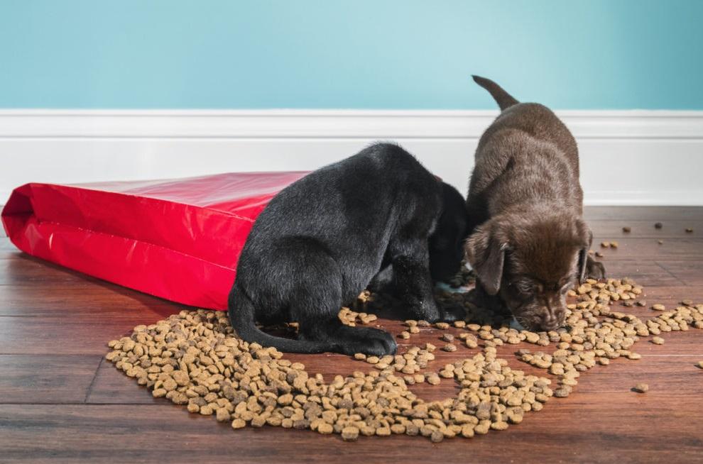 Почему нельзя кормить кошку домашней едой или кормом