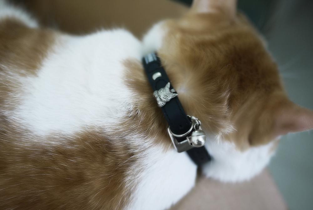 Как действует ошейник от блох для кошек и как правильно его применять