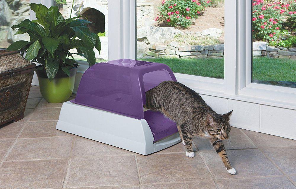Кого лучше выбрать для дома: кота или кошку?