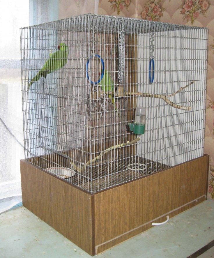 Что нужно для волнистого попугая: как обустроить клетку питомцу