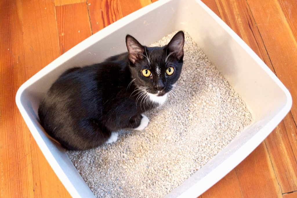 Как приучить котенка к лотку - безотказные правила
