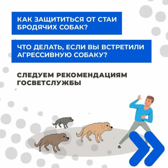 Как избавиться отбездомных животных