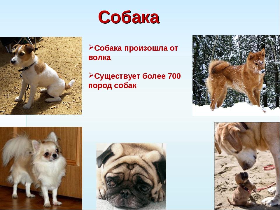 ᐉ сколько пород собак официально существует? - zoomanji.ru