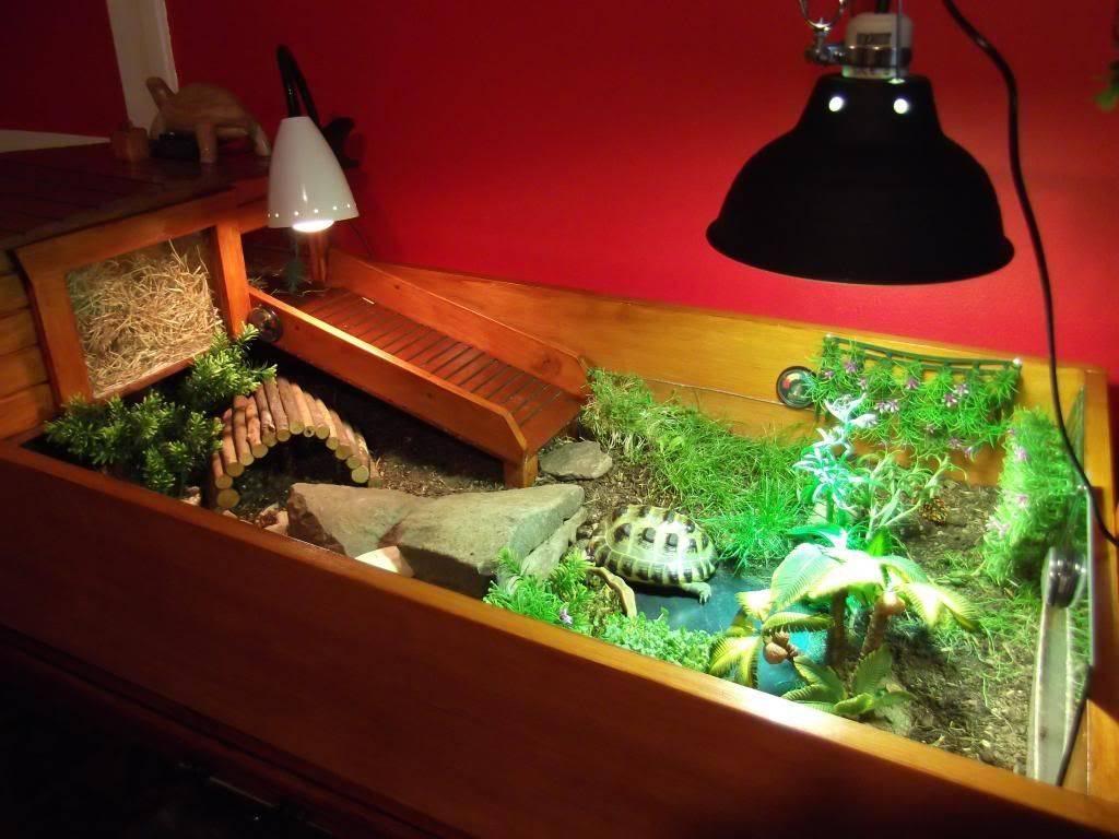 Обустройство террариума для сухопутных черепах: как сделать домик своими руками
