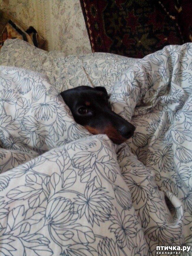 Почему собака роет кровать научное объяснение