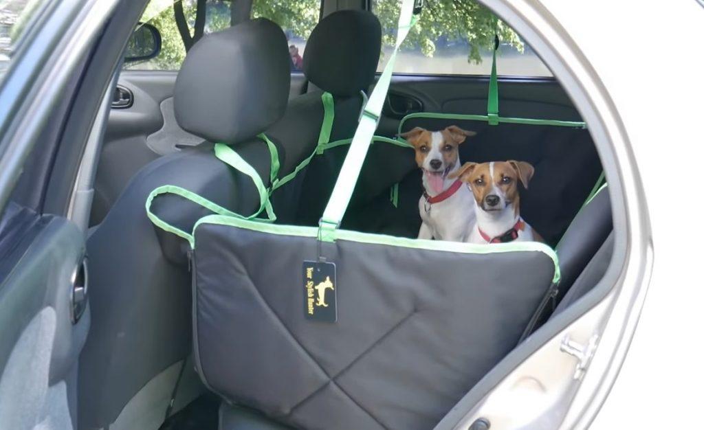 Как правильно перевозить собаку в машине: приучение и приспособления