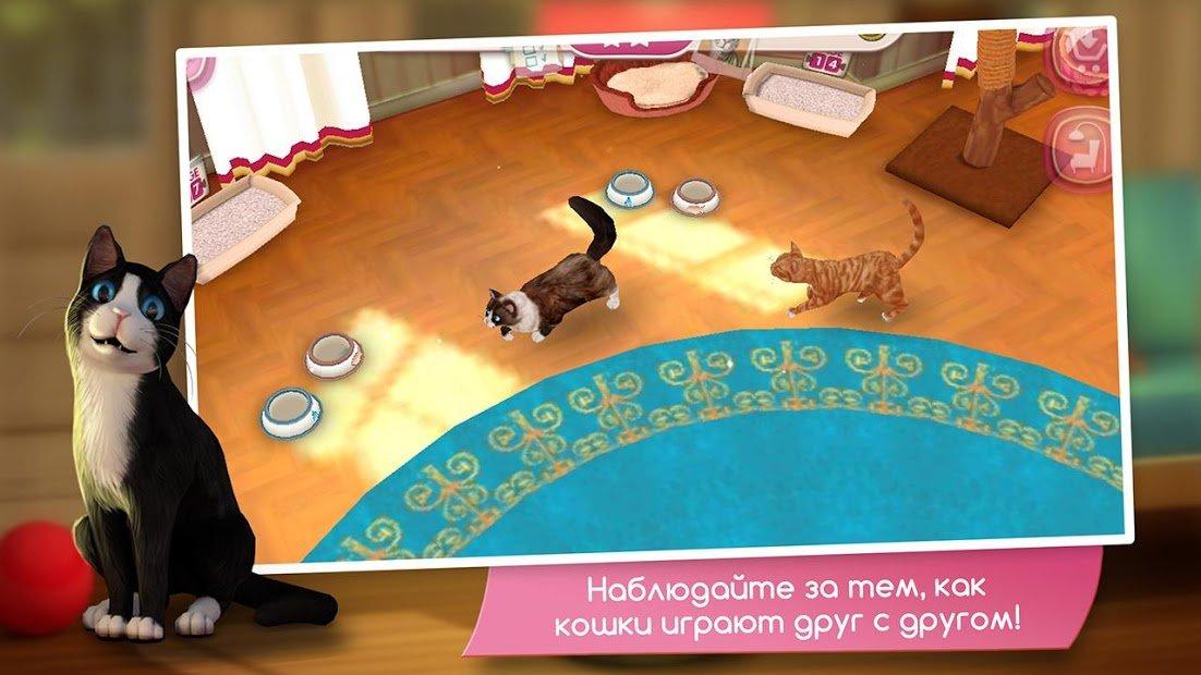 Как выбрать игровой комплекс для кошки: разъясняем во всех подробностях