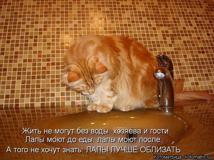 Сколько кошка может прожить без еды и воды?
