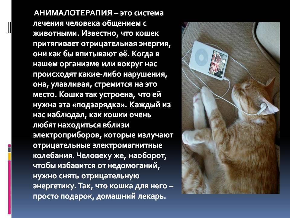 Почему кот должен обязательно жить в доме?