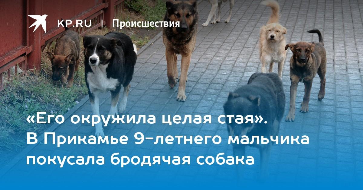 Бездомные собаки — в какие организации обращаться?