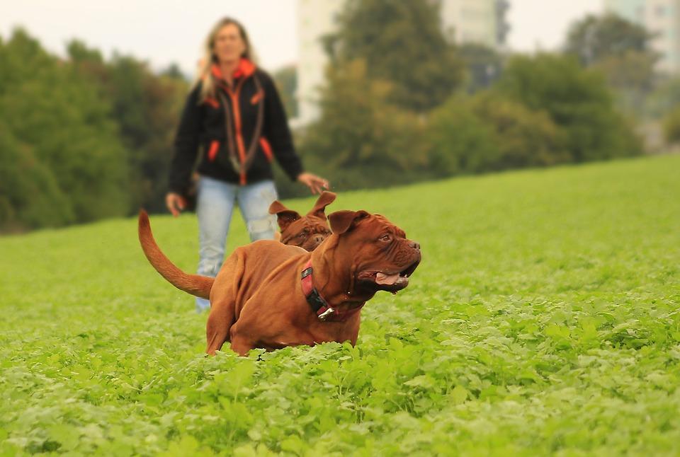 Как правильно выгуливать собак?