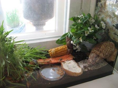 Какой грунт подойдет для улиток ахатин? сейчас у меня камни. разве можно землю для цветов? со всякими удобрениями?