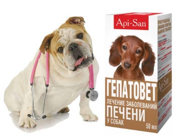 Гепатовет для собак: инструкция по применению, цена, отзывы