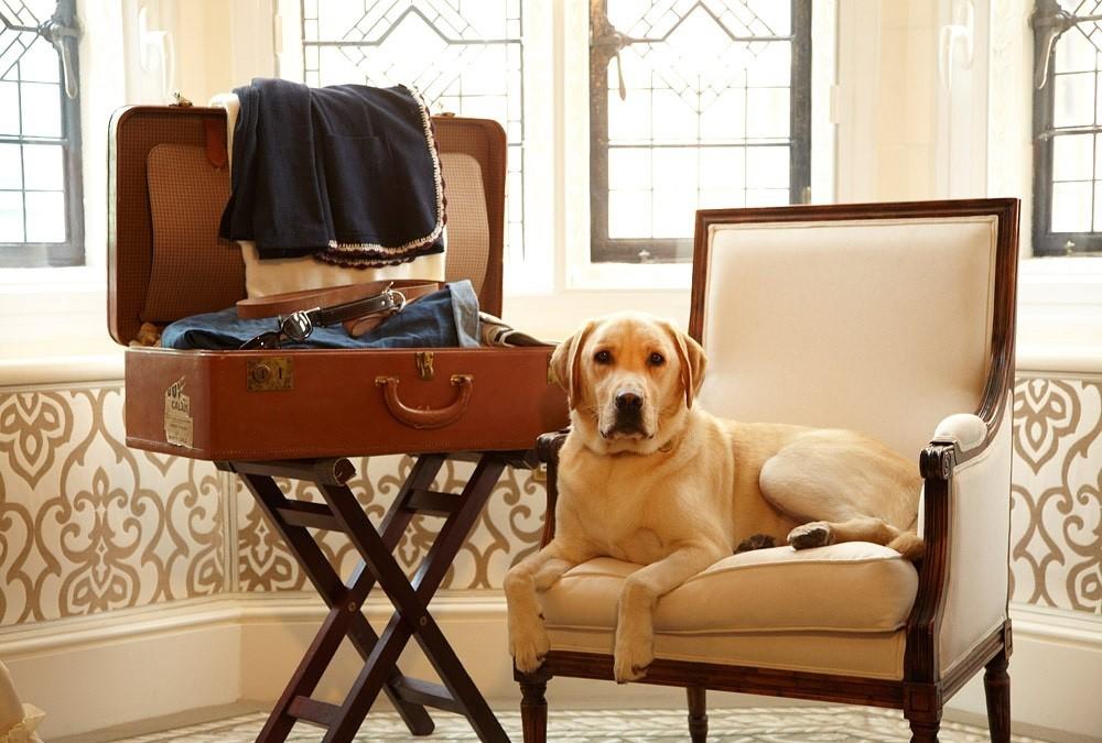 С кем лучше оставить собаку на время отпуска?