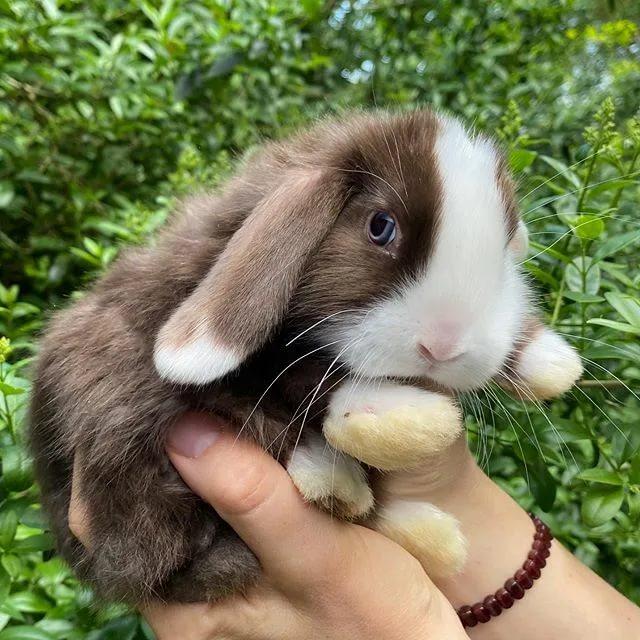 Самые лучшие кролики — 20 пород с названием и фото