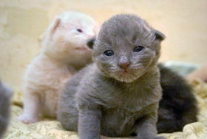 На какой день котята открывают глазки после рождения и появляется слух?