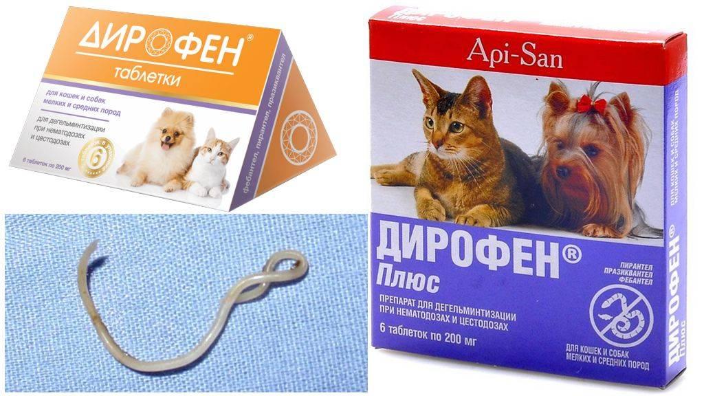 Можно ли глистогонить беременную кошку: таблетки и суспензии