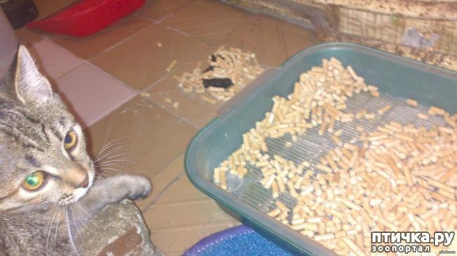 Как отучить кота гадить в неположенном месте, чем обрабатывать пол, углы, диван и пр.