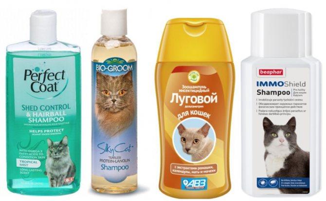 Как и когда можно начинать мыть котенка?
