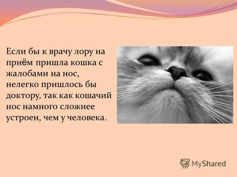 """Недержание мочи у кошек - симптомы. ветеринарная клиника """"зоостатус"""" в москве"""
