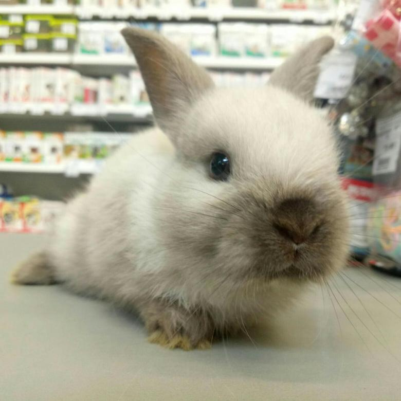 Питомники декоративных кроликов