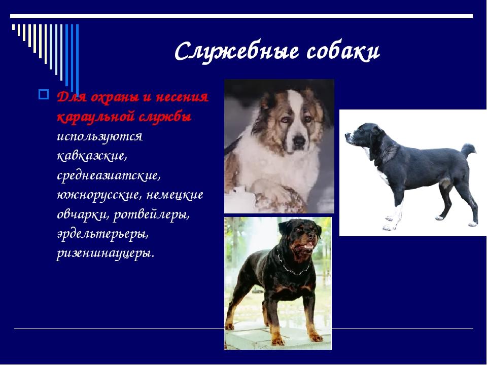 Породы собак: названия, описание и фотографии