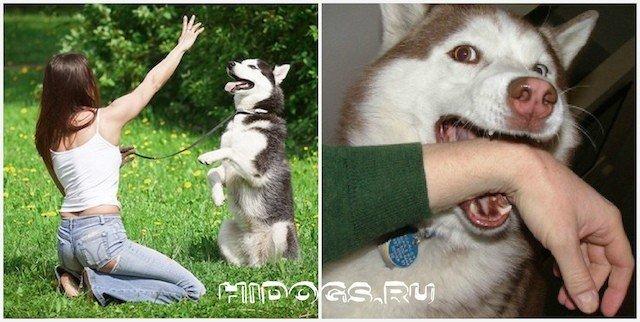 Почему щенки кусают хозяев за руки и ноги: способы отучения собаки