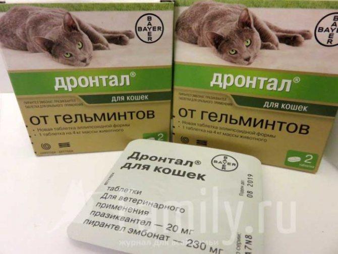 «дронтал» (для кошек): инструкция по применению, аналоги, цена и отзывы