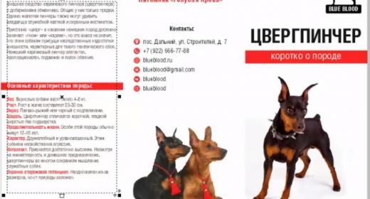 Цвергпинчер: описание породы, цена щенков