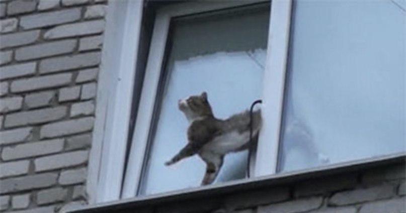 Серая кошка или кот в доме – приметы и поверья