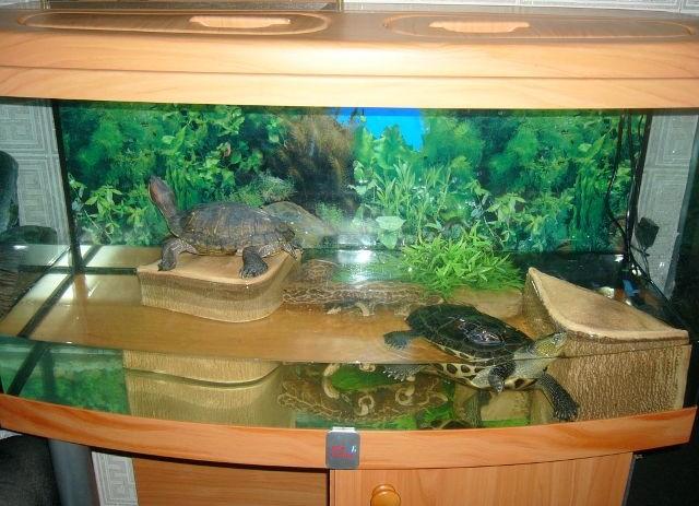 Аквариум для красноухой черепахи: как обустроить аквариум