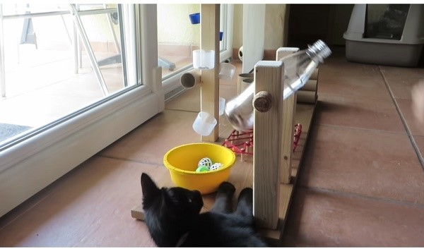 ✅ как сделать долгую кормушку для кошки. кормушка из бутылок - спецтехника52.рф