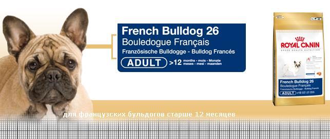 Чем кормить французского бульдога в домашних условиях: полный разбор рациона питания