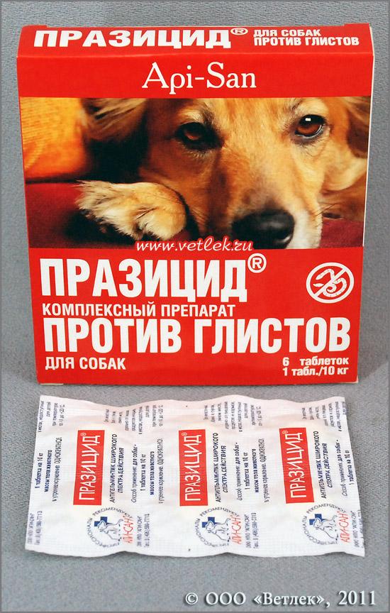 Глисты у собак: симптомы и лечение. средство от глистов у собак. | нвп «астрафарм»