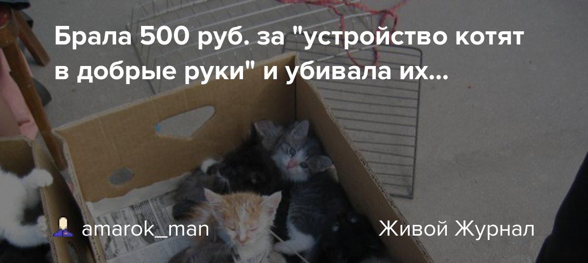 Как пристроить кошку в надёжные руки