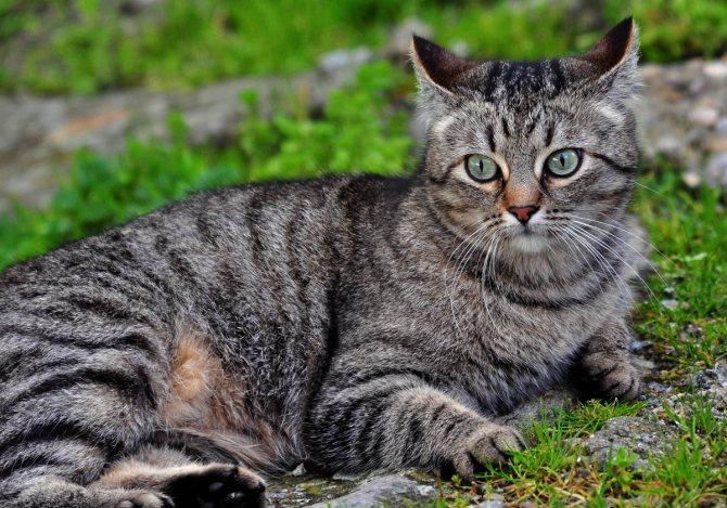 Все окрасы беспородных кошек