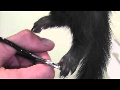 Как стричь когти гильотиной