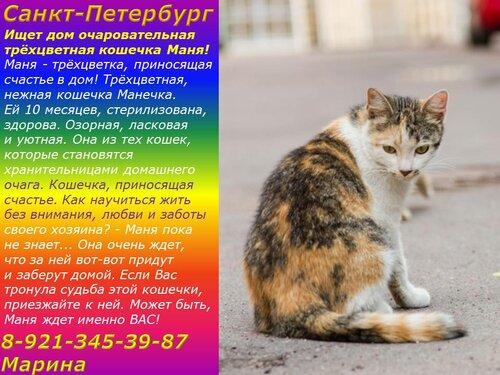 Трехцветная кошка в доме: приметы, народные поверья, что делать, если нашли черепахового котенка