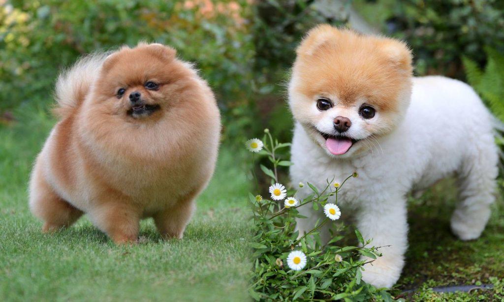 44 маленьких пород собак, которые станут идеальными компаньонами