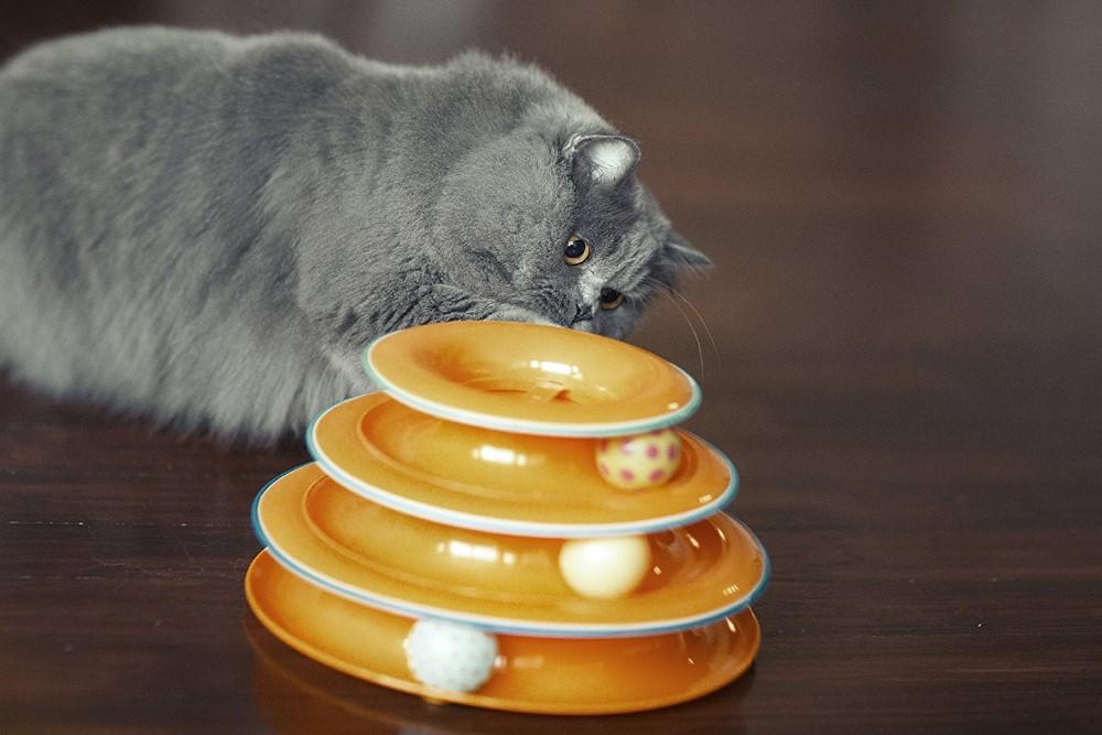 Вязаные игрушки для кошек своими руками. лучшие игрушки для кошек: от простейших поделок до интерактивных комплексов
