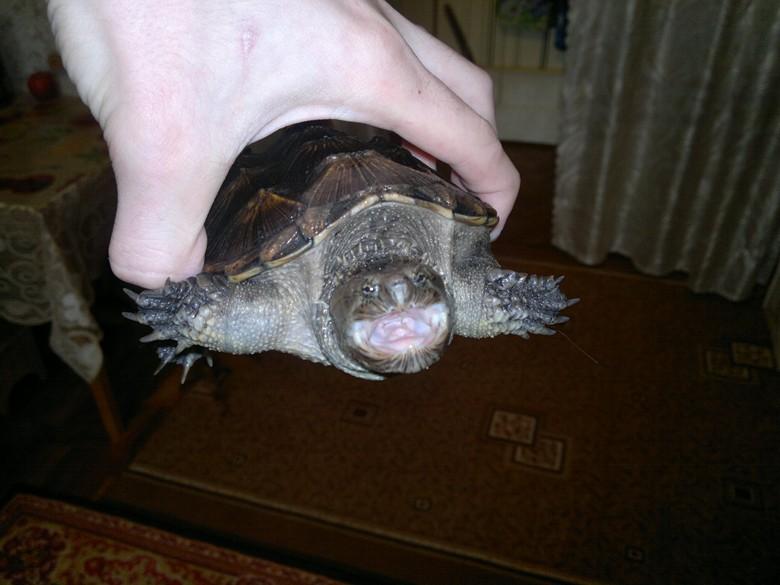 Черепахи уход и содержание в домашних условиях