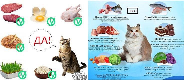 Можно ли котенку сырое мясо?