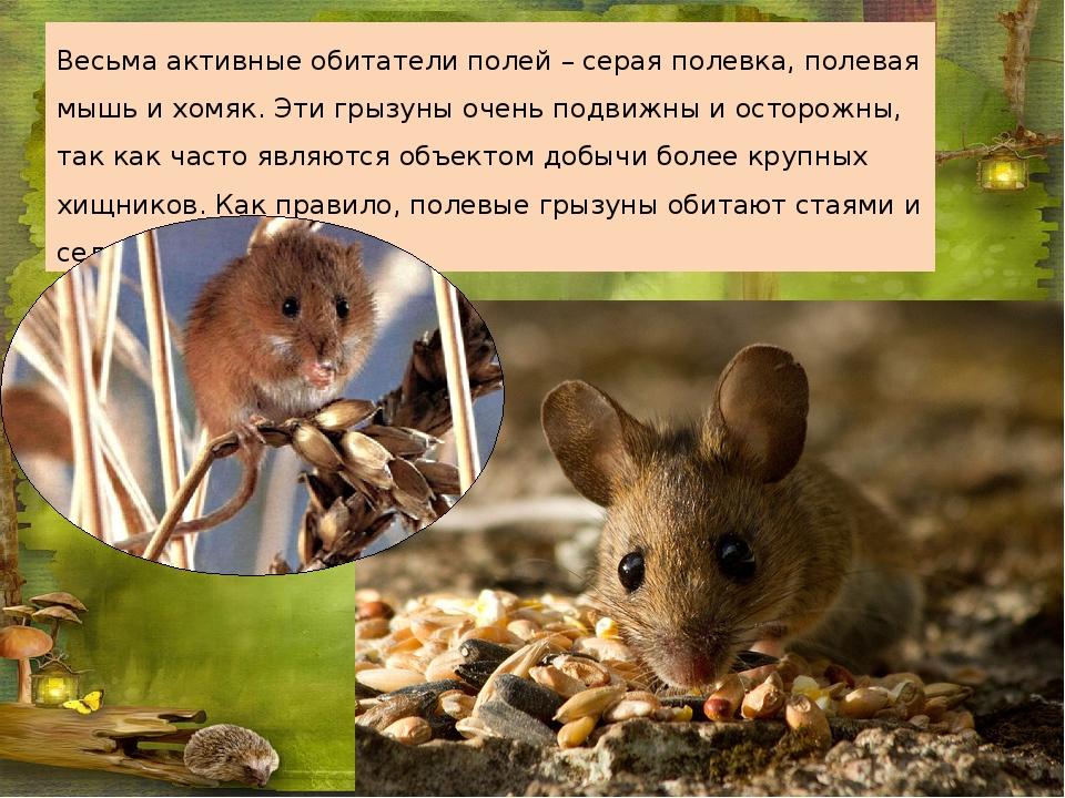 Мыши под полом обзор способов избавления от ненавистных грызунов
