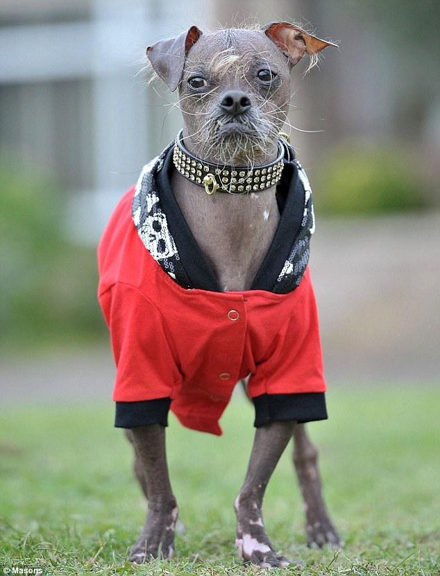 Самые глупые породы собак - топ 10 с фото
